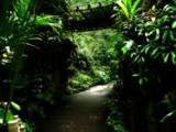 Jungle in the Hood by jojomercury, photography->gardens gallery