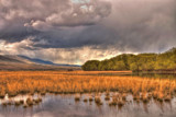Marshland by DigiCamMan, photography->landscape gallery