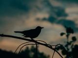 Dark bird by Lin_O, photography->birds gallery