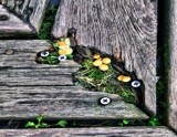 mini fungi by Lin_O, photography->mushrooms gallery