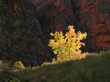 Zion - The Burning Bush by nmsmith, photography->landscape gallery