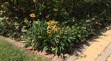 Garden Display by tigger3, photography->gardens gallery
