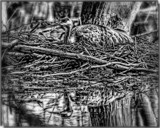 Nesting_B&W by tigger3, contests->b/w challenge gallery