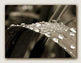 Drops of Water by theradman, Photography->Macro gallery
