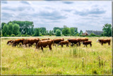 Grazing The Pastures by corngrowth, photography->landscape gallery
