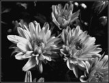 Mums B&W by trixxie17, contests->b/w challenge gallery