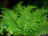 Graceful Ferns by LynEve, photography->nature gallery
