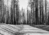 After The Fire by petenelson, Photography->Landscape gallery