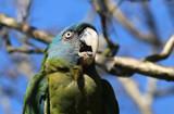Whaaaaaaaaattt? by Nikoneer, photography->birds gallery