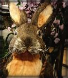 Mr Bunny by trixxie17, holidays gallery
