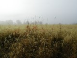 Fog&Field by jojomercury, Photography->Landscape gallery