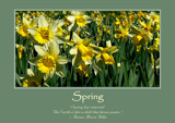Spring Poster by LynEve, photography->flowers gallery