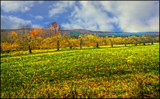 Apple Orchard in Autumn by cynlee, photography->manipulation gallery