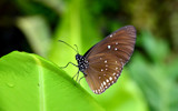 Tropical Butterfly XI - DOF by Heroictitof, photography->butterflies gallery