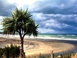 Cabbage Tree at Kakanui by LynEve, Photography->Shorelines gallery