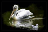 oops youre not my mom! by JQ, Photography->Birds gallery