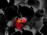 Blackened Orchid 2 by grimbug, photography->manipulation gallery