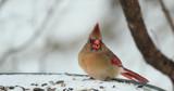 Ms. C. Enjoying A Tidbit by tigger3, photography->birds gallery