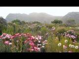 Flowers by murungu, Photography->Landscape gallery