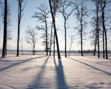 Sun behind trees by foppa, Photography->Landscape gallery