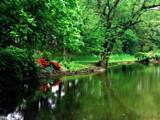 Pondside by jojomercury, Photography->Shorelines gallery
