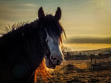Horse by Eubeen, photography->animals gallery