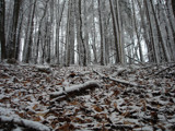Snowy Forest by Mauntnbeika, Photography->Landscape gallery