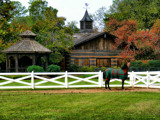 Cahaba Valley Farms by SatCom, Photography->Animals gallery
