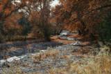 Whitewater Creek Flows Through the Sycamores by DesertDenizen, photography->landscape gallery