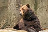 Sad Bear by Ramad, photography->animals gallery
