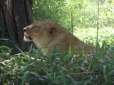 So sleepy by orangejulius, Photography->Animals gallery