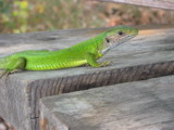 Mood in green by vanya, photography->reptiles/amphibians gallery