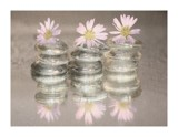 wet daisies by JQ, photography->still life gallery