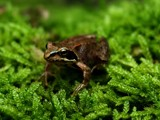 froggie 2 by stormdancer, Photography->Reptiles/amphibians gallery