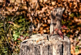 Defries Garden Nov. 4. 2015 by tigger3, photography->nature gallery