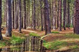 Trees Above, Trees Below by gr8fulted, photography->landscape gallery