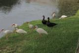 New Neighbours by GomekFlorida, photography->birds gallery