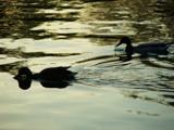 symmetry by anacris, Photography->Birds gallery