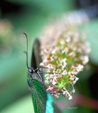 Butterfly Exhibit-Close Up by tigger3, photography->macro gallery