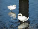 Original Swan Lake by rvdb, photography->birds gallery