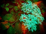 Blossoms & Leaves by LynEve, photography->manipulation gallery