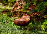 Fungi by Lin_O, photography->mushrooms gallery