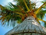 Palm Tree by Zezima, photography->nature gallery
