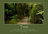 Trees Poster by LynEve, photography->nature gallery