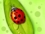 Ladybug by breeze_lc, Illustrations->Digital gallery
