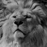 Majestic by JQ, Photography->Animals gallery