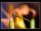 Grounded by photoimagery, Photography->Insects/Spiders gallery