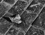 The Leaf That Came Home to Die by snapshooter87, photography->nature gallery