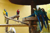 Parrot Fashion by TheWhisperer, Photography->Birds gallery