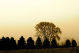 Evening Silhouettes by rriesop, Photography->Landscape gallery